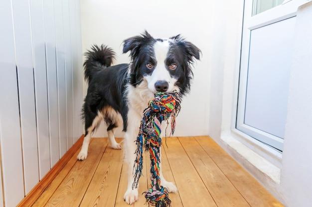 Divertente ritratto di carino sorridente cucciolo di cane border collie Foto Premium