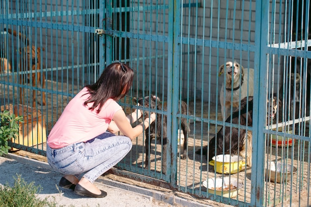 Ragazza volontaria nella scuola materna per cani. riparo per cani randagi. Foto Premium