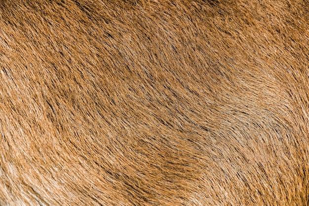 Struttura naturale della pelle dello sfondo della pelliccia di capra marrone. Foto Premium