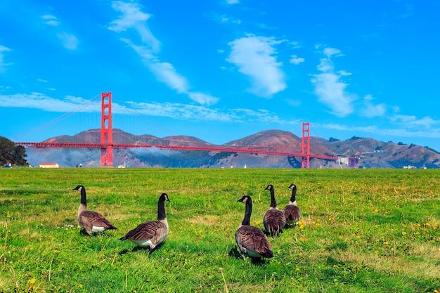 Golden gate bridge con oche sull'erba Foto Premium