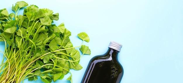 Centella asiatica lascia il succo per la salute su sfondo blu. copia spazio Foto Premium