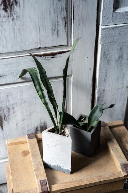 Verde in vasi di cemento sulla vecchia scatola di legno. design moderno del loft interno del soggiorno. Foto Premium