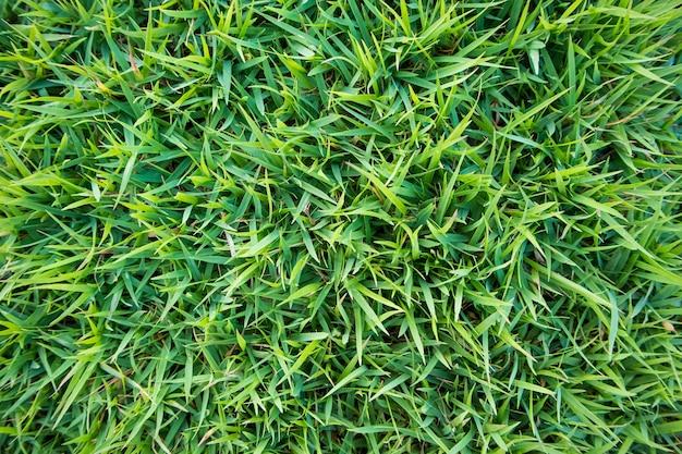 Sfondo naturale di texture erba verde Foto Premium
