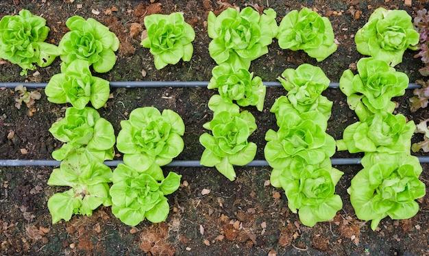 Serra e verdura verde Foto Premium