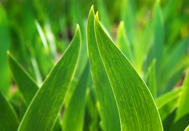 Foglia verde alla luce del sole Foto Premium