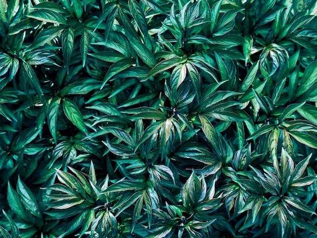 Fondo del modello delle foglie verdi Foto Premium