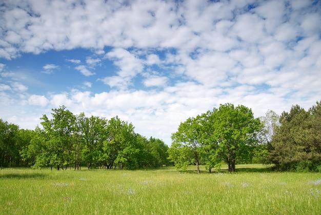 Prato e cielo blu verdi con la foresta Foto Premium