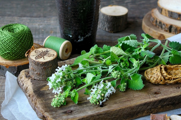 Legno di menta verde Foto Premium