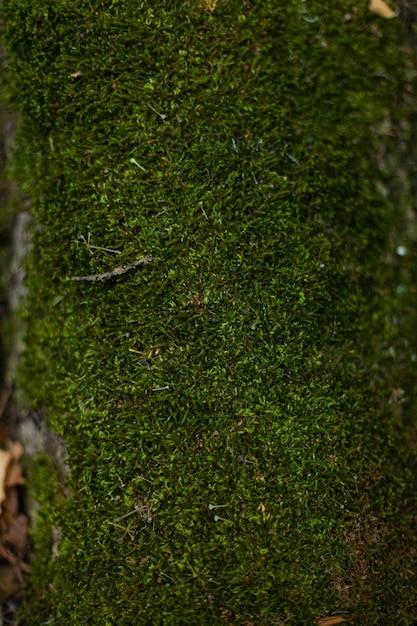 Muschio verde nella foresta su pietre e alberi Foto Premium