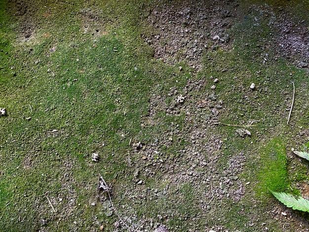 Muschio verde in pietra Foto Premium