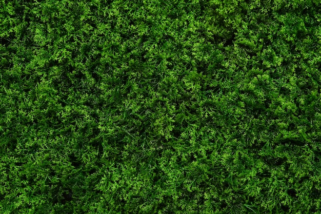 Sfondo verde natura, parete verde dalle foglie Foto Premium