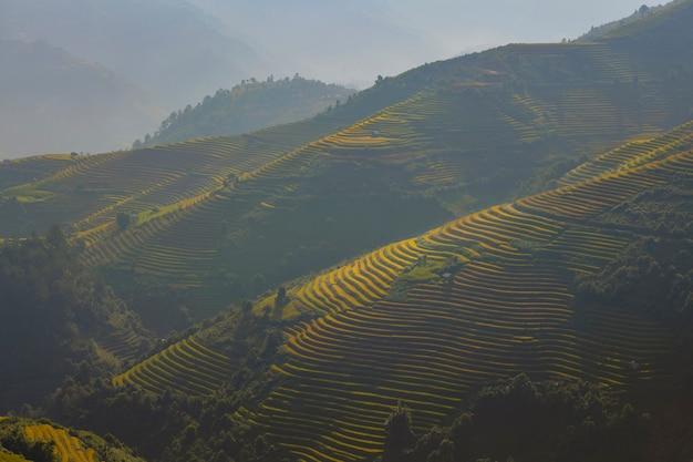Campi di riso verde terrazzati a mu cang chai, vietnam campo di riso Foto Premium