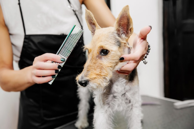 Groomer prendersi cura dei peli del cane Foto Premium