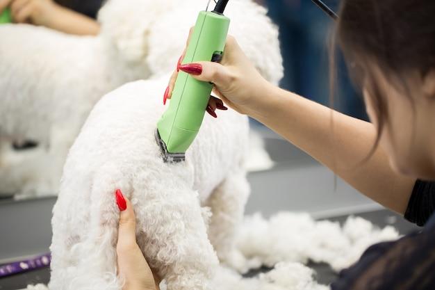 Groomer che taglia un piccolo cane bichon frise con un tagliacapelli elettrico Foto Premium