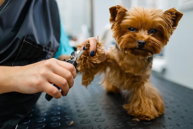 Il toelettatore con le forbici taglia gli artigli del simpatico cane Foto Premium