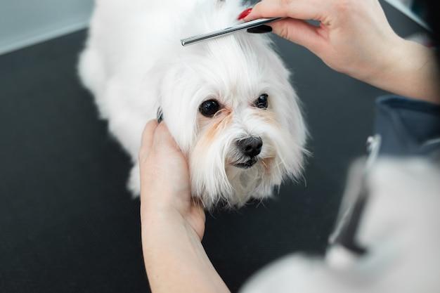 Toelettatura di animali, toelettatura, asciugatura e acconciatura di cani, pettinatura della lana Foto Premium
