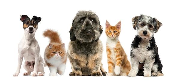 Gruppo di cani e gatti davanti a un muro bianco Foto Premium