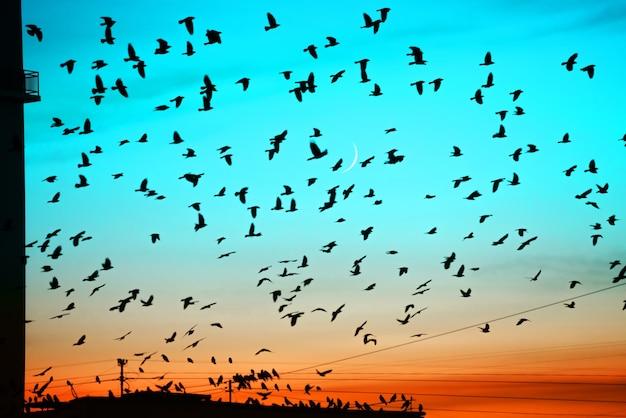 Gruppi di uccelli che volano sopra il tetto al tramonto sullo sfondo della luna. sagome di uccelli sopra la costruzione di sagome. Foto Premium