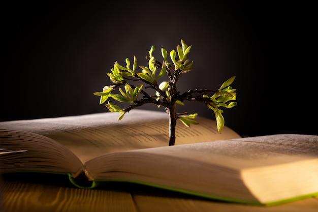 Albero in crescita con foglie verdi da un libro aperto Foto Premium
