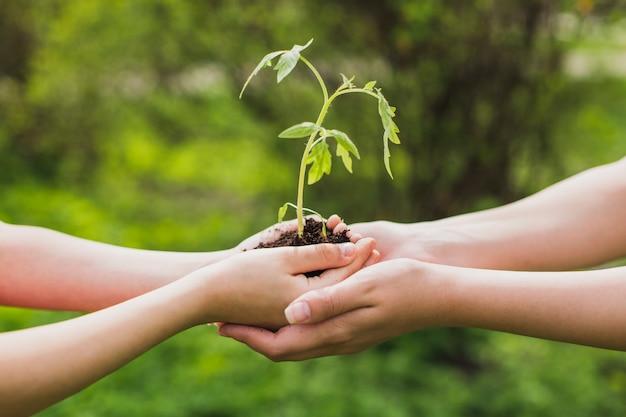 Mani che tengono una piccola pianta Foto Premium