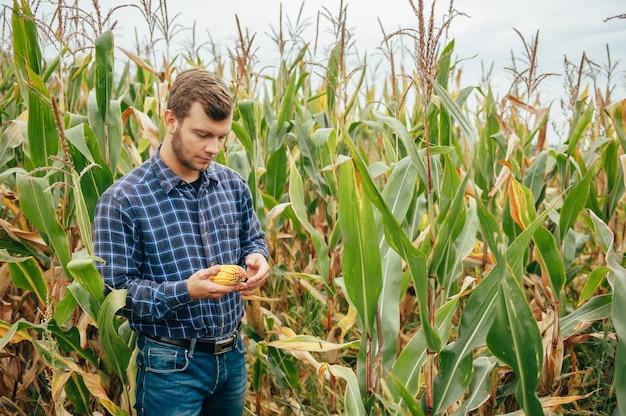 Bello agronomo tiene tablet touch pad computer nel campo di mais ed esamina i raccolti prima della raccolta Foto Premium