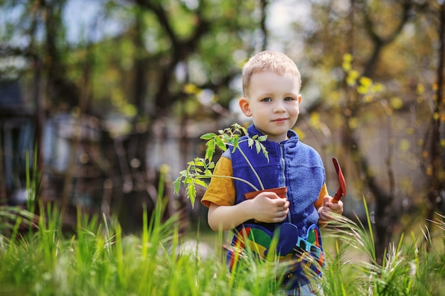 Bel ragazzino biondo che pianta e giardinaggio piantine di pomodoro in giardino o fattoria in primavera Foto Premium