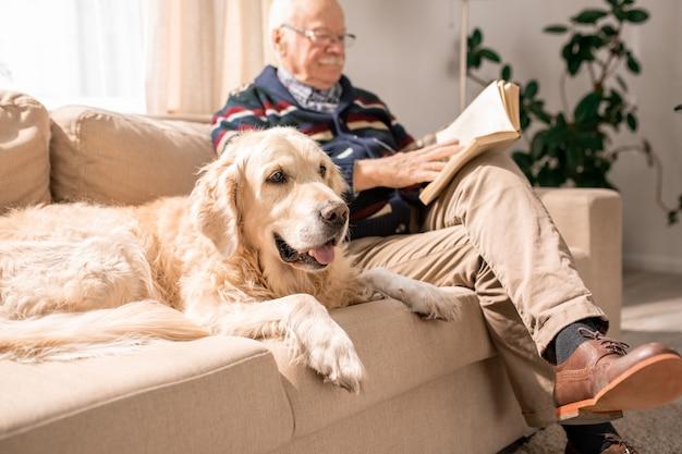 Cane felice sul divano con il vecchio Foto Premium
