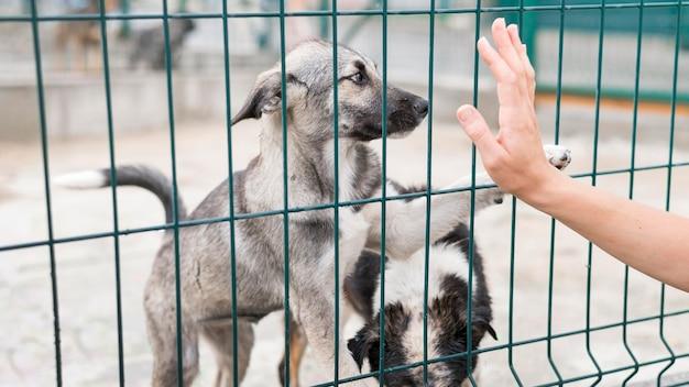 Cani felici di salvataggio dietro il recinto al rifugio di adozione Foto Premium