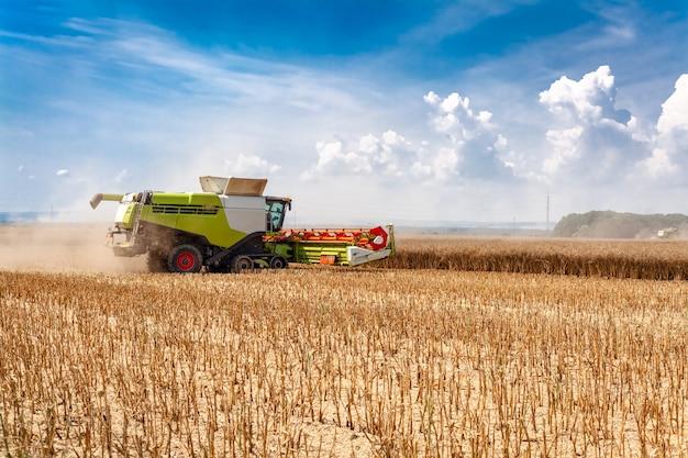 Mietitrice nel campo durante la raccolta del grano Foto Premium