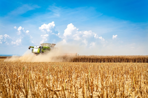 La mietitrice raccoglie il grano maturo nel campo. Foto Premium