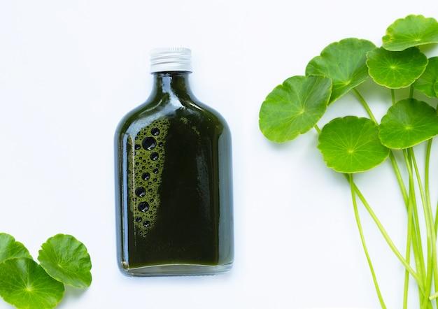 Bottiglia di succo di erbe, foglie verdi fresche di centella asiatica o pianta di pennywort d'acqua o gotu kola. concetto di bevande sane Foto Premium