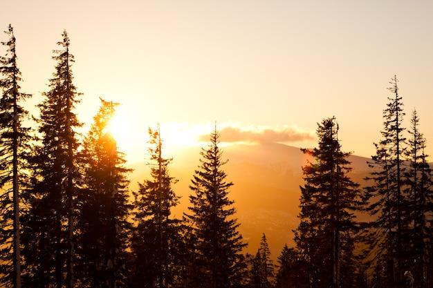 Alte corone di alberi di pino sulle colline e sullo sfondo della valle con un luminoso tramonto dorato sopra il chiaro giorno di estate Foto Premium