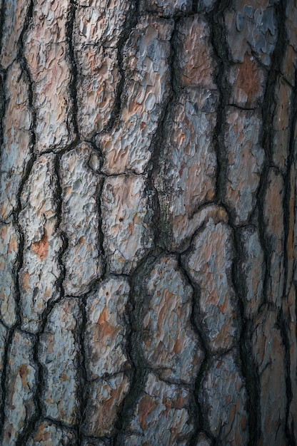 Tessitura di alta qualità della corteccia di albero Foto Premium