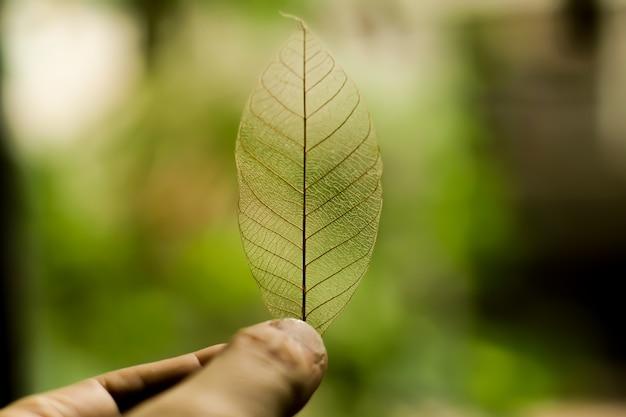 Tenendo la foglia di natura trasparente su sfondo verde natura Foto Premium