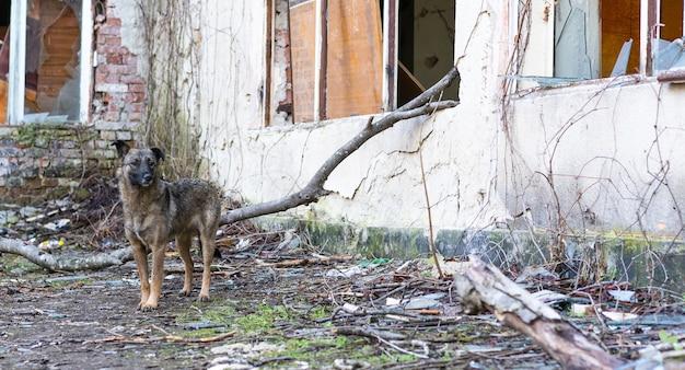 Cane senza casa vicino a un edificio abbandonato Foto Premium