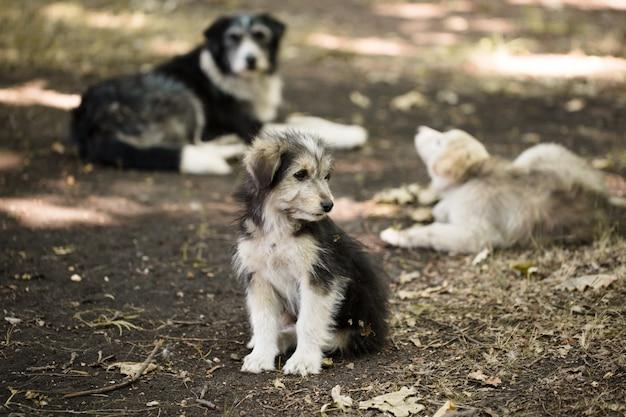 Piccolo cane randagio senzatetto all'aperto Foto Premium
