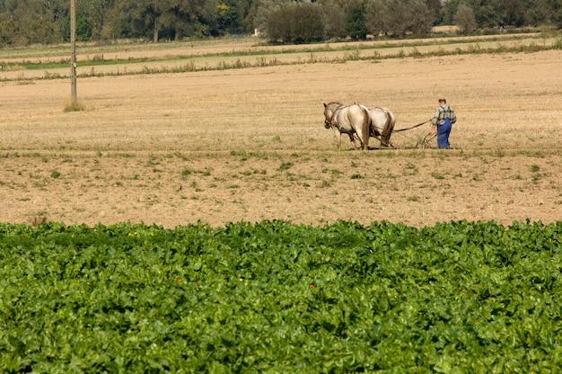 Cavallo che lavora nel campo Foto Premium