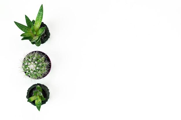 Piante d'appartamento in vaso isolato su bianco Foto Premium