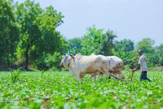 Tecnica agricola indiana Foto Premium