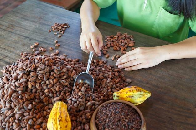 Ispezione manuale della qualità delle fave di cacao Foto Premium