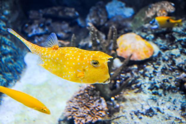 L'acquario di istanbul ha ricevuto visitatori dopo il restauro. Foto Premium