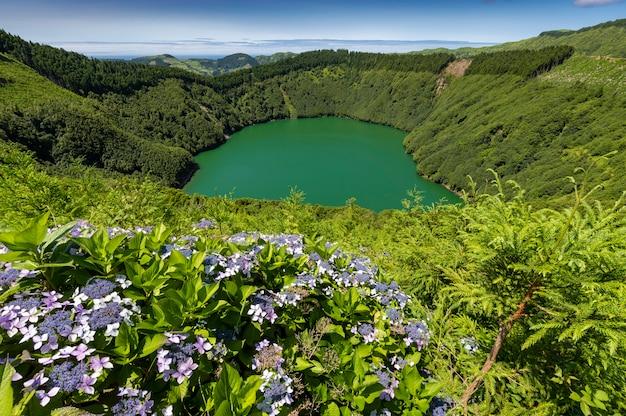 Lagoa de santiago con acqua verde e fiori di ortensia a sao miguel, isole azzorre, portogallo Foto Premium