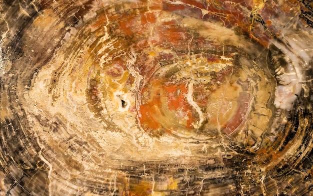 Grande pezzo di legno lucido e pietrificato. sfondo, trama Foto Premium