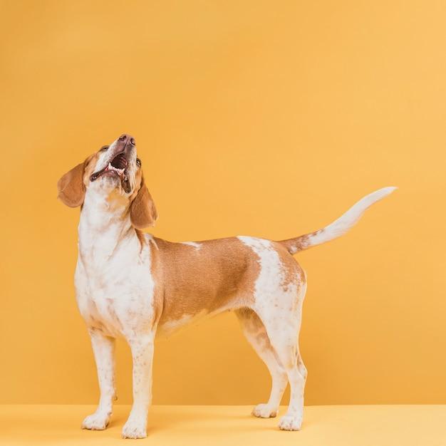 Vista laterale adorabile cane che abbaia Foto Premium