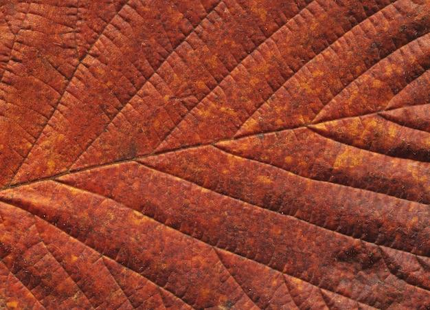 Foglia d'autunno. sfondo autunnale congedo Foto Premium