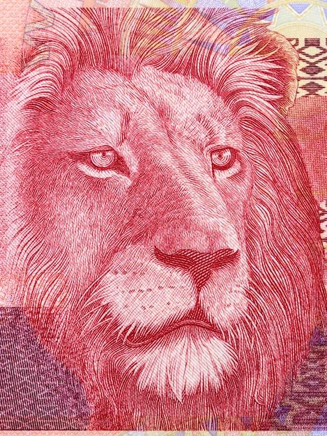 Leone un ritratto da soldi sudafricani Foto Premium
