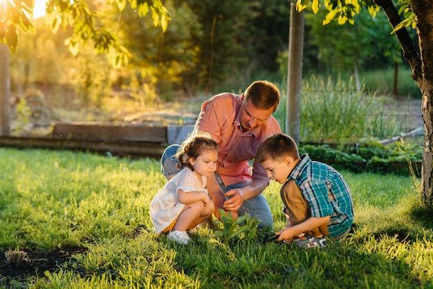 Piccolo fratello e sorella stanno piantando piantine con il padre in un bellissimo giardino primaverile al tramonto. Foto Premium