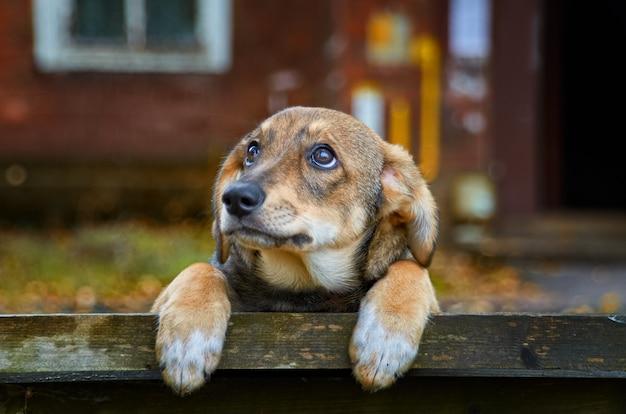 Piccolo cane randagio marrone sulla strada Foto Premium