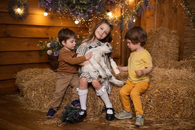 Ragazzi e ragazza dei piccoli bambini in azienda agricola che si siede in covoni di paglia e che gioca con la capra in granaio Foto Premium