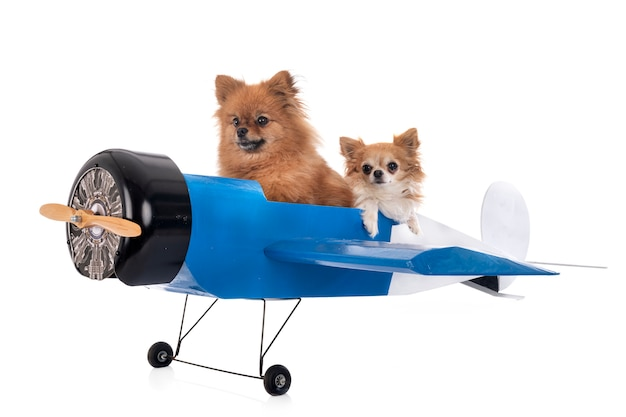 Piccoli cani su un piano in miniatura Foto Premium